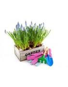 Jardineria y accesorios . Ferretería Hiperolivar